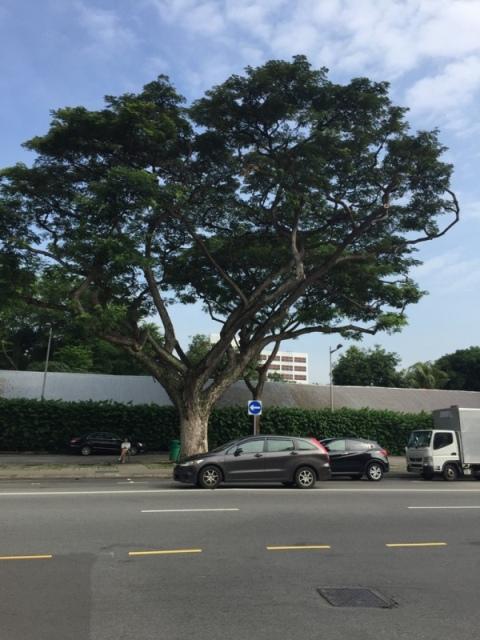 新加坡芽笼